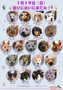 ALMA ティアハイム 1月19日 参加犬猫一覧.jpg